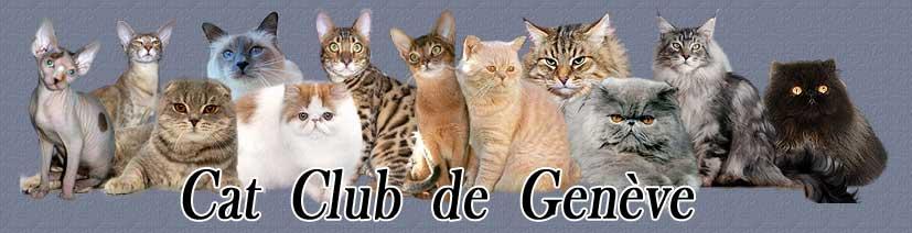 http://www.catclubdegeneve.ch/index/top.jpg